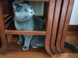 Özel nedenlerden dolayı kedinizi belli bir ücret karsiliginda sahiplendirmek istiyoruz