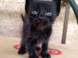 3 Haftalık 4 Yavru Kedicik, İstediğinizi Seçebilirsiniz.