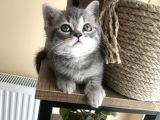 Whiskas bebeğim