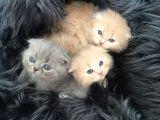 Tatlı bebekler