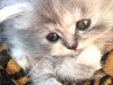 Dişi iran kedim zilli:)