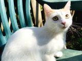 ACİL!!1 yaşında kısırlaştırılmış dişi Tekir kedi