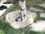 Bahçemizdeki davetsiz misafir