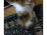 Calico Görme Engelli Kedi, Şanssız