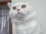 1.5 yaşında aktif erkek kedimi sahiplendiriyorum