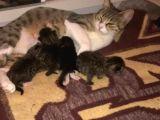 Güzel kızıma ve 4 yavrusuna yuva aranıyor