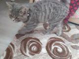 Kedi acilen sahiplendiriyorum bilgi için wp