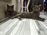 Kedilerimizi sahiplendirmek istiyoruz acil