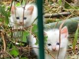 3 Aylık Yavru Kedi