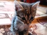 1 haftalık yavru kedi sahip arıyor. ACİL.