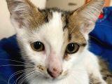 Minik yavru kedilere acil yuva iki aylıklar :( lütfen :(