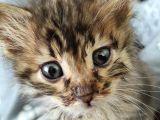 2 aylık dişi yavru kedimize sıcak bir yuva arıyoruz