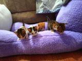 4 yavru kedi